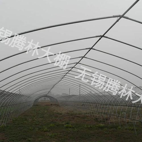 直销大棚草莓苗