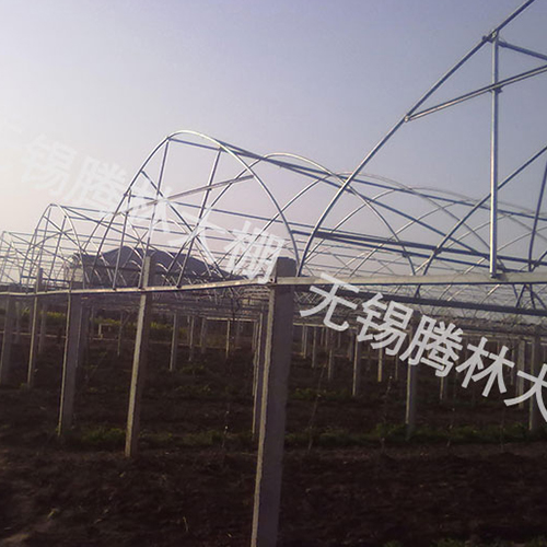 武汉连栋葡萄大棚