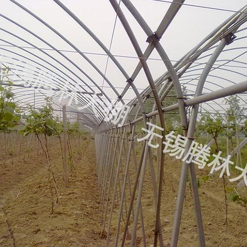武汉单体交叉式葡萄大棚