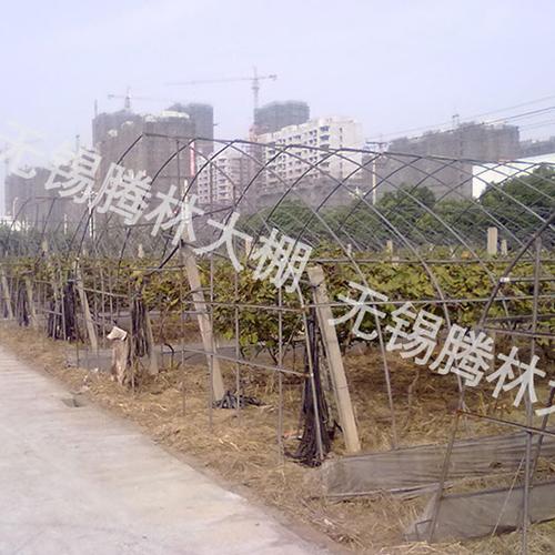 武汉葡萄大棚蔬菜