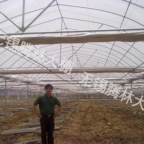 武汉大棚葡萄产地