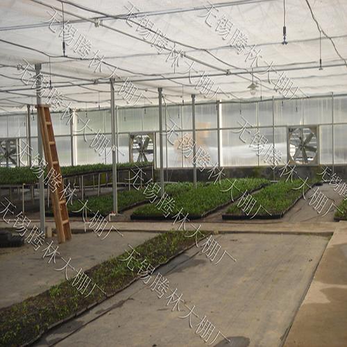 江苏草莓棚产量