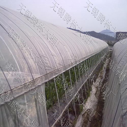 吴江大棚草莓的棚规格