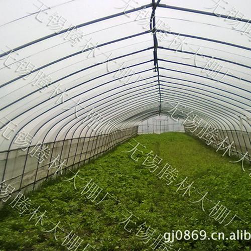 吴中植物大棚