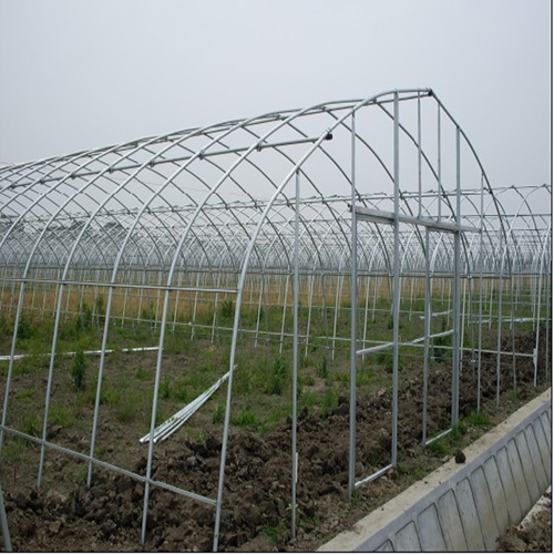 吴中大棚草莓养殖