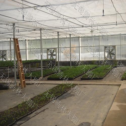 草莓棚产量