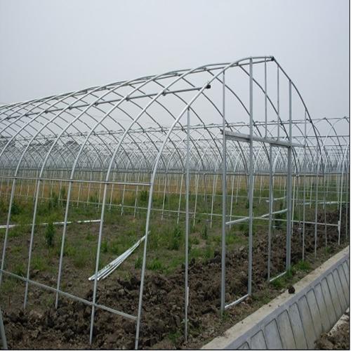 大棚草莓养殖