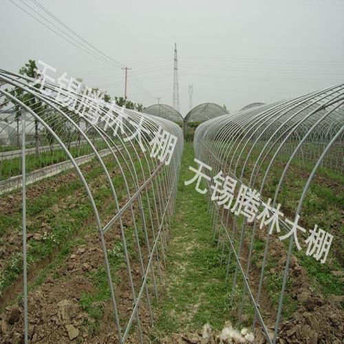 农用单体钢架大棚
